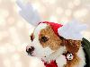 Free Nature Wallpaper : Dog - Christmas