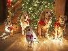 Free Nature Wallpaper : Dogs - Christmas Lights