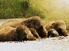 Free Nature Wallpaper : Elephants