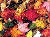 Free Nature Wallpaper : Fallen Leaves