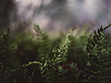 Free Nature Wallpaper : Fern and Spiderwebs