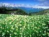 Free Nature Wallpaper : Flowers
