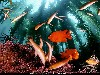 Free Nature Wallpaper : Fishes