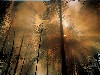 Free Nature Wallpaper : Forest Fire - The Day After
