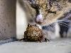 Free Nature Wallpaper : Frog and Cat