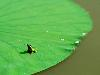 Free Nature Wallpaper : Frog