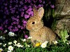 Free Nature Wallpaper : Bunny