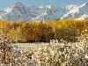 Free Nature Wallpaper : Golden Landscape