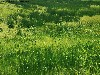 Free Nature Wallpaper : Grass
