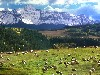 Free Nature Wallpaper : Grazing Sheep - Colorado