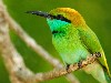 Free Nature Wallpaper : Green Bird