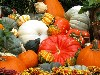 Free Nature Wallpaper : Halloween Pumpkin Festival