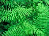 Free Nature Wallpaper : Hammock - Fern