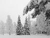 Free Nature Wallpaper : Hard Winter