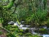Free Nature Wallpaper : Inner Forest River