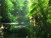 Free Nature Wallpaper : Jungle