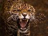 Free Nature Wallpaper : Jaguar