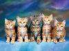 Free Nature Wallpaper : Kittens