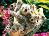 Free Nature Wallpaper : Koalas