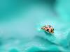 Free Nature Wallpaper : Lady Beetle