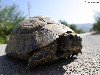 Free Nature Wallpaper : Turtle