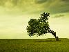 Free Nature Wallpaper : Tree