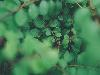 Free Nature Wallpaper : Leaves