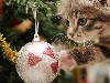 Free Nature Wallpaper : Little Cat - Christmas