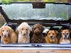 Free Nature Wallpaper : Load of Dogs