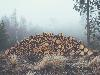 Free Nature Wallpaper : Logs