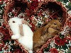 Free Nature Wallpaper : Love Bunnies
