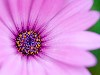 Free Nature Wallpaper : Flower