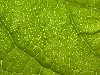 Free Nature Wallpaper : Leaf