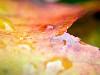 Free Nature Wallpaper : Leaf
