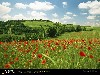 Free Nature Wallpaper : Flower Field
