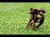 Free Nature Wallpaper : Playing Dog