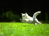 Free Nature Wallpaper : Playing Kitty