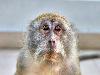 Free Nature Wallpaper : Monkey