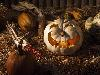 Free Nature Wallpaper : Pumpkin - Halloween