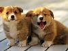 Free Nature Wallpaper : Puppies