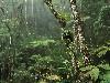 Free Nature Wallpaper : Rainforest