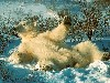 Free Nature Wallpaper : Polar Bear