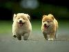 Free Nature Wallpaper : Running Puppies