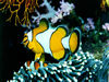 Free Nature Wallpaper : Sea Garden