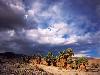 Free Nature Wallpaper : Seventeen Palms Oasis