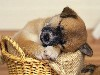 Free Nature Wallpaper : Sleeping Puppy