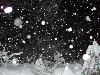 Free Nature Wallpaper : Snowfall at Night