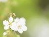 Free Nature Wallpaper : Spring - Blooming