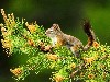 Free Nature Wallpaper : Squirrel