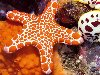 Free Nature Wallpaper : Starfish